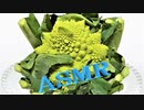 「音フェチ」ASMR!立体音響!生野菜(ロマネスコ)を切ったり、もぎったりする音!イヤホン推奨
