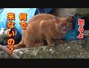 ご飯があるよと子猫を激しく呼ぶ母猫