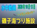 水中動画(2020年10月13日)in 磯子海づり施設
