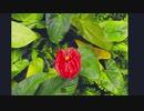 箱根強羅公園 熱帯植物館