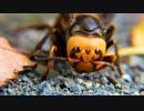【4K虫と音楽】オオスズメバチの顔を接写♪River City 暗い ヒップ ホップ&ラップ Drew Banga