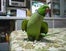 【ニコニコ動画】ウロウロ・デニーロ(08年6月26日)を解析してみた
