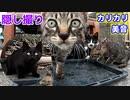 カリカリが無くなった後の子猫の表情