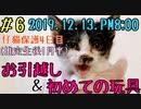 【子猫】保護4日目夜は子猫お引越し&初めての玩具の反応に感動