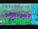 水中動画(2020年10月27日)in 大黒ふ頭西緑地
