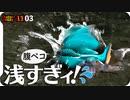 1103【カワセミの飛び込み捕食】カルガモ採餌に悲劇の脚ケガセキレイやコガモの水浴び。ヒドリガモエクリプス。いろんな鳥の趾、ジョウビタキのメス【 #今日撮り野鳥動画まとめ 】 #身近な生き物語