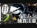 1106【はらぺこハクセキレイのあおむし捕食】ツグミが渡ってきた。ヨシがオオバンに、柿がスズメに食べられる。カルガモ潜水やカワウの換羽【 #今日撮り野鳥動画まとめ 】 #身近な生き物語