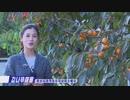 朝鮮中央テレビ・新しく出た記者