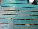 『青いベンチ』を歌ってみたver綾川雪弥