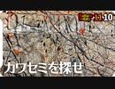 1110【カワセミと紅葉の葉が似てた】コガモのエクリプス羽、男の娘。セキレイ3種にメジロ、シジュウカラ。落ち葉が増えて秋めいてきた【 #今日撮り野鳥動画まとめ 】 #身近な生き物語
