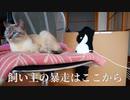 猫との再会がうれしすぎて飼い主が暴走してしまいました…【Vimtagペットカメラ】