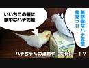 BL・バードラブ(いいちこインコ&チュン太)