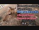 奈良Part 1. お辞儀する鹿さんと大仏(東大寺) Нара часть 1. Кланяющиеся олени и великий Будда