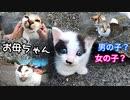 【検証】子猫の母猫はどっち?「三毛猫?キジトラ?」