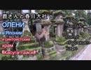 奈良Part2. 鹿さんと春日大社 Нара в Японии. Часть 2. Олени и храм «Касуга-тайся»