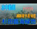 水中動画(2020年11月10日)in 杉田臨海緑地