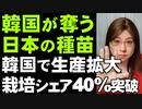 奪った種苗で大もうけ。韓国で栽培面積40%突破。日本のべにはるかが「海南1号?」