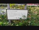 【素材配布】函館湯の川温泉「松倉川」説明版(2020年9月撮影)