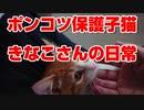 【絶体絶命】猪に喰われそうになった野良子猫を思い切って保護してしまった結果【part15】