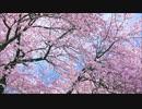 2つの春に花は散る / ボカロオリジナル曲