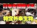 【ゆっくり解説】日本の生態系を脅かす特定外来生物たち