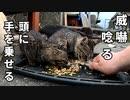 ノラクロ子猫 対 秋刀魚「最終回」