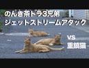 伝説の重鎮猫、修羅猫とのんき猫たちに囲まれる