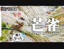 1202【スズメがススキを食べる】ツグミが捕食中にヒヨドリに襲われる。小さな猛禽モズの縄張りがセグロカモメに奪われる。カルガモの喧嘩。ゴイサギ幼鳥【 #今日撮り野鳥動画まとめ 】 #身近な生き物語