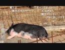 『 旅部39』栃木県の旅 15
