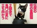 伝説の重鎮猫、迫りくる鬼門の夏に立ち向かう
