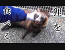 【ぴ】観覧注意!血が滴るタヌキを食べたら・・・ ジビエ 自給自足 タヌキ ロードキル