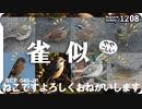 1208【スズメに似た小鳥達】タヒバリ、ホオジロ、アオジ。カイツブリ飛翔、捕食。小さな猛禽モズ。野良猫多い。ねこです。鶴見川 SCP-040-JP【 #今日撮り野鳥動画まとめ 】 #身近な生き物語