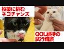 伝説の重鎮猫、投薬おやつで悪戦苦闘する