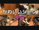 【11月ベスト!】家猫のかわいい動画9選!2020.11【キジ三毛のまる】