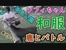 【4K撮影】和服ナース・ソフィちゃん 奈良探訪・鹿編【着物】