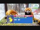 油断大敵!?♒緊急地震速報♒:青森県・岩手県(2020年12月12日)