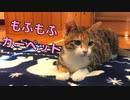 カーペットを敷いた時の猫の反応が興奮しすぎてヤバイw【キジ三毛のまる】