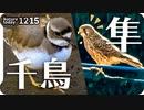 1215【猛禽類捕食とイカルチドリ】チョウゲンボウとツグミ、カラスに食べられる昆虫。カワセミにジョウビタキやオカヨシガモに幼いハシボソガラスの鳴き声【 #今日撮り野鳥動画まとめ 】 #身近な生き物語