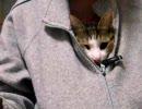 ネコが服のなかに入ってくるんです!><;