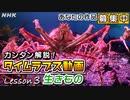 [新絶景タイムスケイプ] 生きものを撮る方法 タイムラプス動画募集中! Timelapse | BS4K8K | NHK