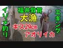 【釣り動画】アオリイカ、超巨大キス釣りあげました!福井県敦賀!エギング、ヤエン釣り遠征!