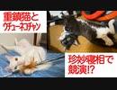 珍妙な謎寝相、伝説の重鎮猫とウチューネコチャンで競演する