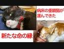 病床の重鎮猫、新たな命の縁を運ぶ