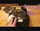 お気に入りのねぐらを守ろうとする猫