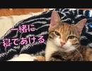 【猫のASMR】添い寝する猫のゴロゴロ音が心地良い♪