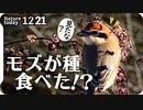 1221【肉食モズが紫式部を食べた!】タシギやコサギの捕食、野生タヌキに野良猫、ジョウビタキやツグミがピラカンサを食べる。ホオジロ雄雌【 #今日撮り野鳥動画まとめ 】 #身近な生き物語