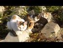 【子猫】寒すぎてもう耐えられん・・・