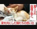SOS依頼の棄てられ保護子猫、看取りを覚悟した夏
