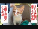 SOS依頼の棄てられ子猫、終末期の猫と共に生きる