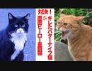 激突!キレたバターナイフ猫vs覆面ヒーローの重鎮猫